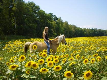Rai Reiten Neuhof, Harmonie Pferd Mensch Natur