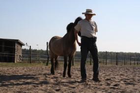 Dominanzübungen Pferd, Seminare vor Ort, Rai Reiten Neuhof