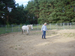 Detlef Teuscher, Follow Up Training, Rai Reiten Neuhof