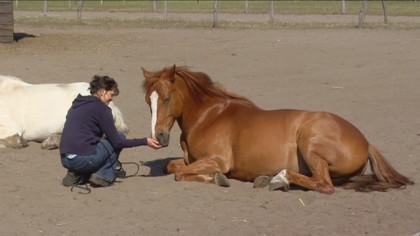 Wege zum Pferd, Rai Reiten Neuhof, Kontakt mit Pferden
