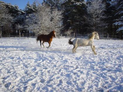 Rai Reiten Neuhof, Offenstallhaltung, Horsemanship Training